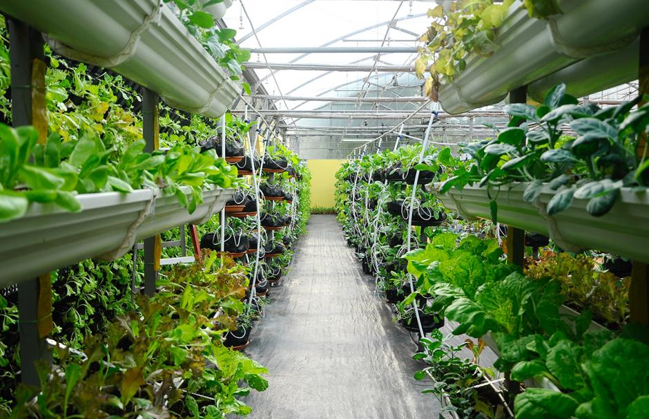 Photo of a greenhouse where vegetables can be grown above ground on vertically arranged trays.