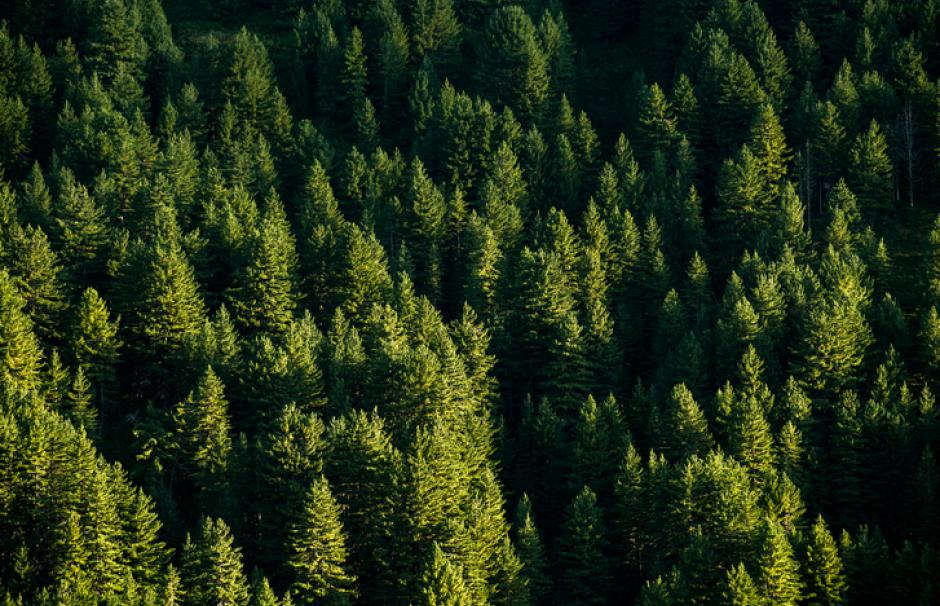 France's forest stock is the third-largest in Europe in terms of volume of wood, and expanding every year.